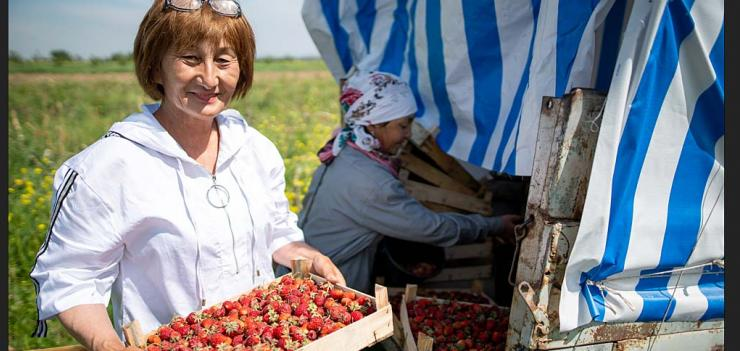 A guarantee fund-backed loan enabled Zuhra to increase the profitability of her strawberry farm. Photography: Olivier Le Blanc/USAID