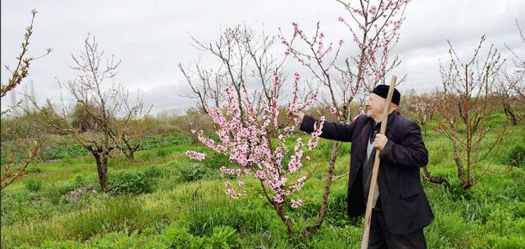 Yadigar Maharramov is confident that he will have double the hazelnut production during the next season.